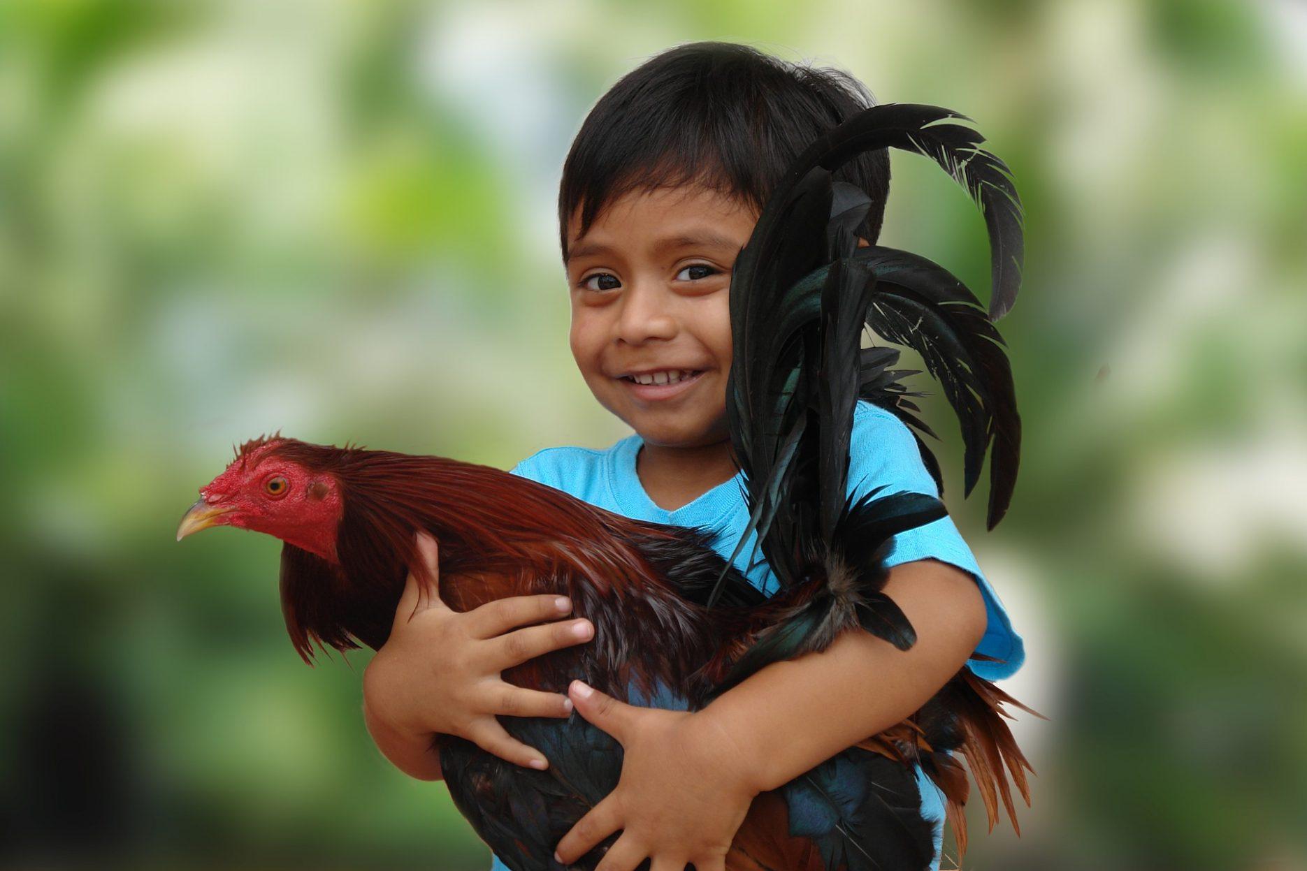 Auf dem Bild sieht man ein Kind, das einen Hahn im Arm hält.