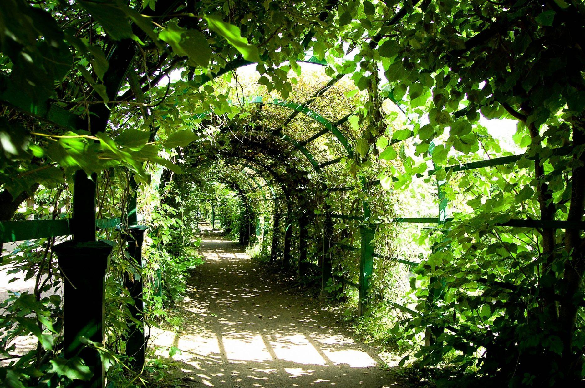 Das Bild zeigt einen von grünen Pflanzen bewachsenen Gang im Freien, es ist nicht genau erkennbar, wo der Gang hinführt.